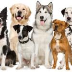 Reiki para animais na HousePet, dia 1 de Maio