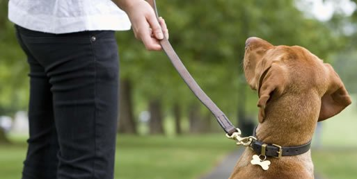 Almada promove Reiki em escola canina