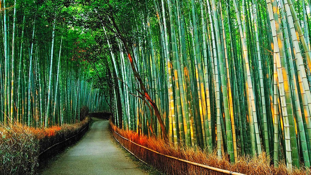 awesome-scene-with-clumping-bamboos