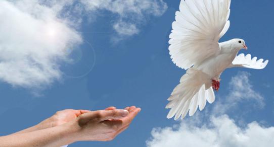 hands-releasing-dove-3