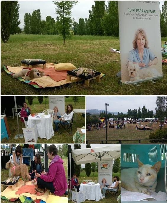 Animal Fest em Loures – Reiki para animais em grande