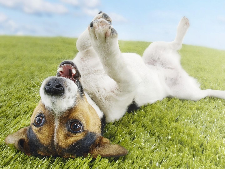 Código de Ética para Praticantes de Reiki para Animais