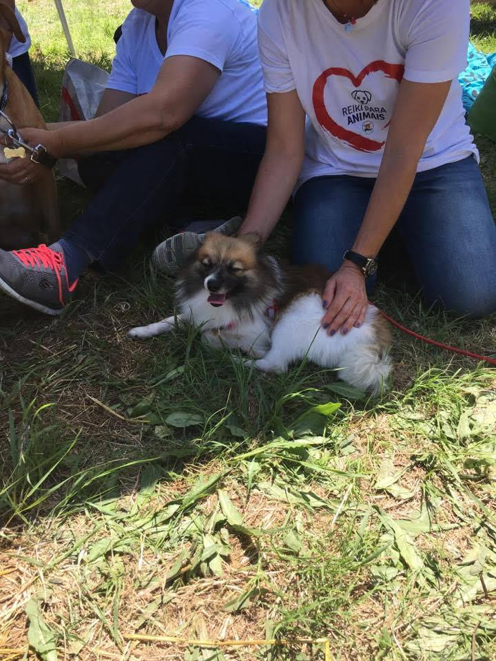 ANIMALFEST Loures – Voluntários de Reiki Animal