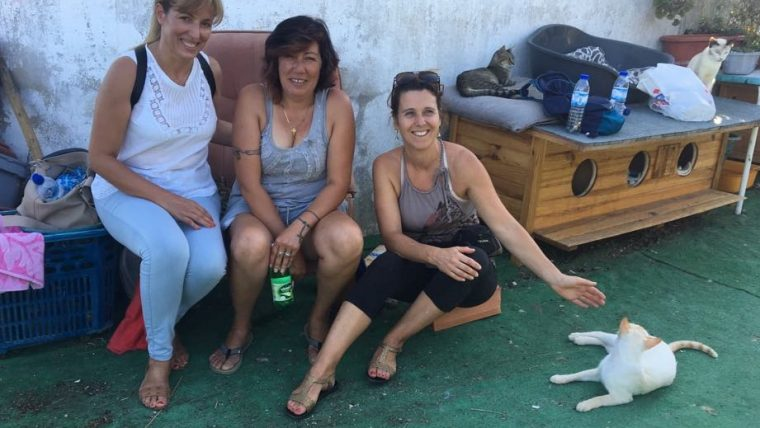 Reiki em Animais na Tico & Teco, no Cartaxo