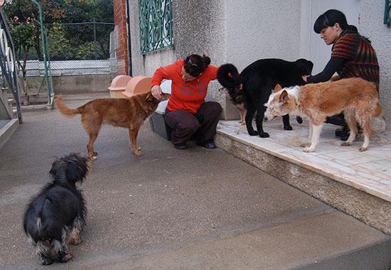 Voluntariado Reiki para Animais