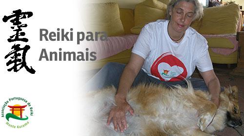 post-reiki-para-animais