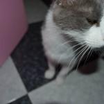 Como o Reiki ajudou na recuperação do meu gato Pepe