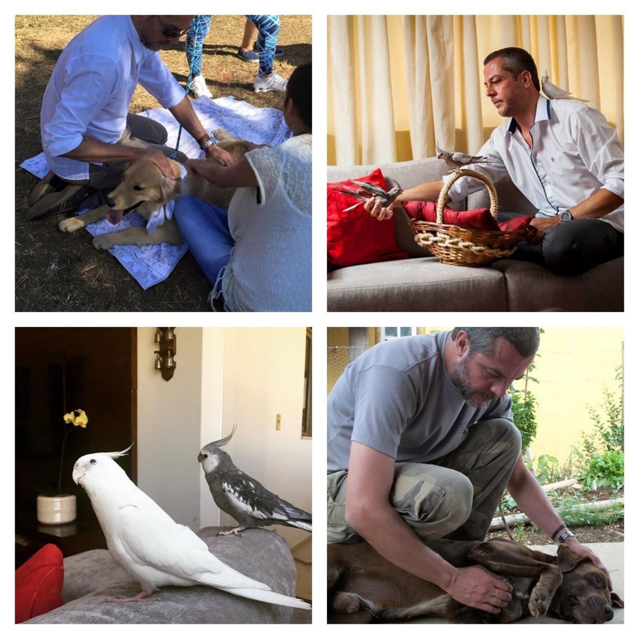 Reiki veterinário, o Reiki aplicado nos animais