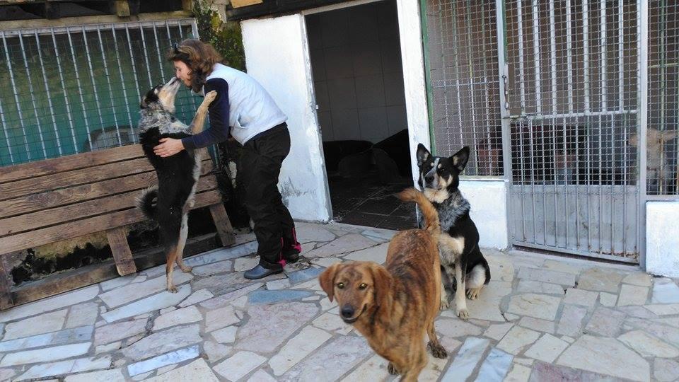 Voluntariado Reiki na APCA – cuidar de animais com Amor e muito Reiki