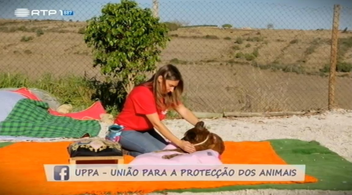 Carla Brito em Reportagem na Animais Anónimos – Um caso de sucesso