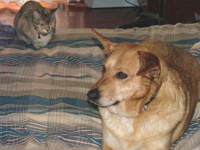 Protocolo de Reiki com a APCA, Associação de Proteção para os Cães Abandonados