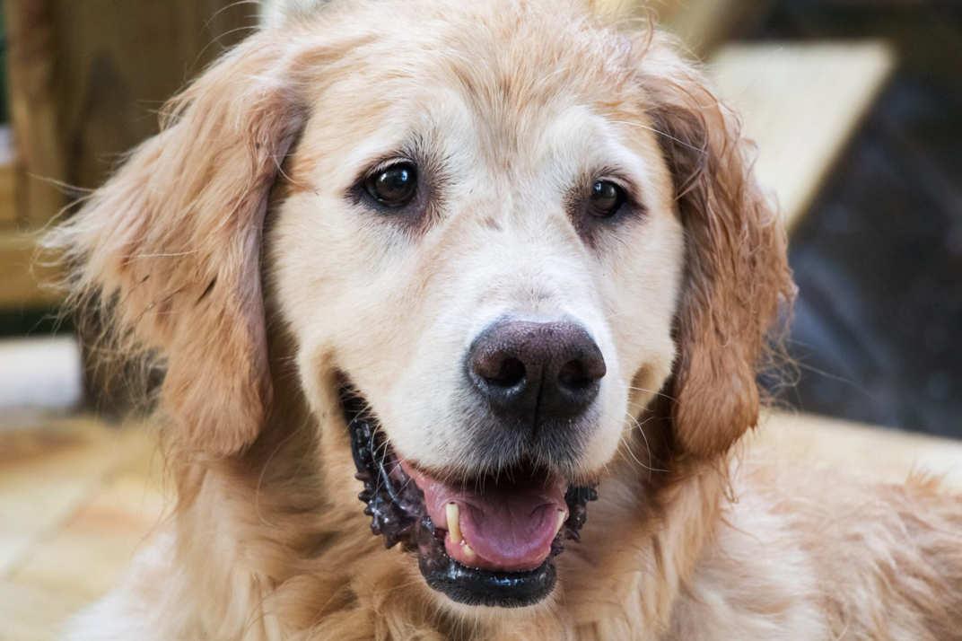 A história de Reiki ao cão Matley