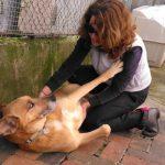 A experiência de Reiki numa Associação para cães abandonados.
