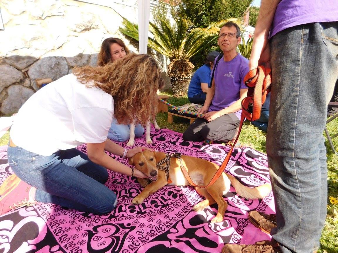 1º Open de Agility de Cascais – Reiki para animais