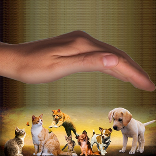 Reiki animal na UPPA – Dia Internacional Reiki