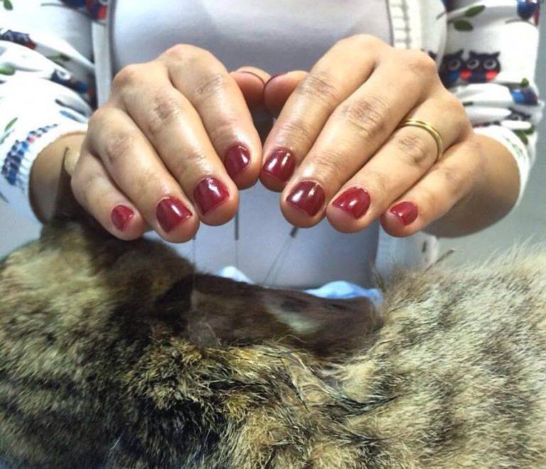 Veterinários promovem Reiki Solidário para animais